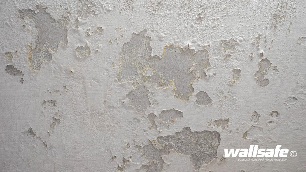muffa sui muri cause